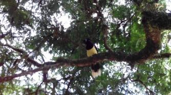 Aves en Cataratas de Iguazú, Argentina