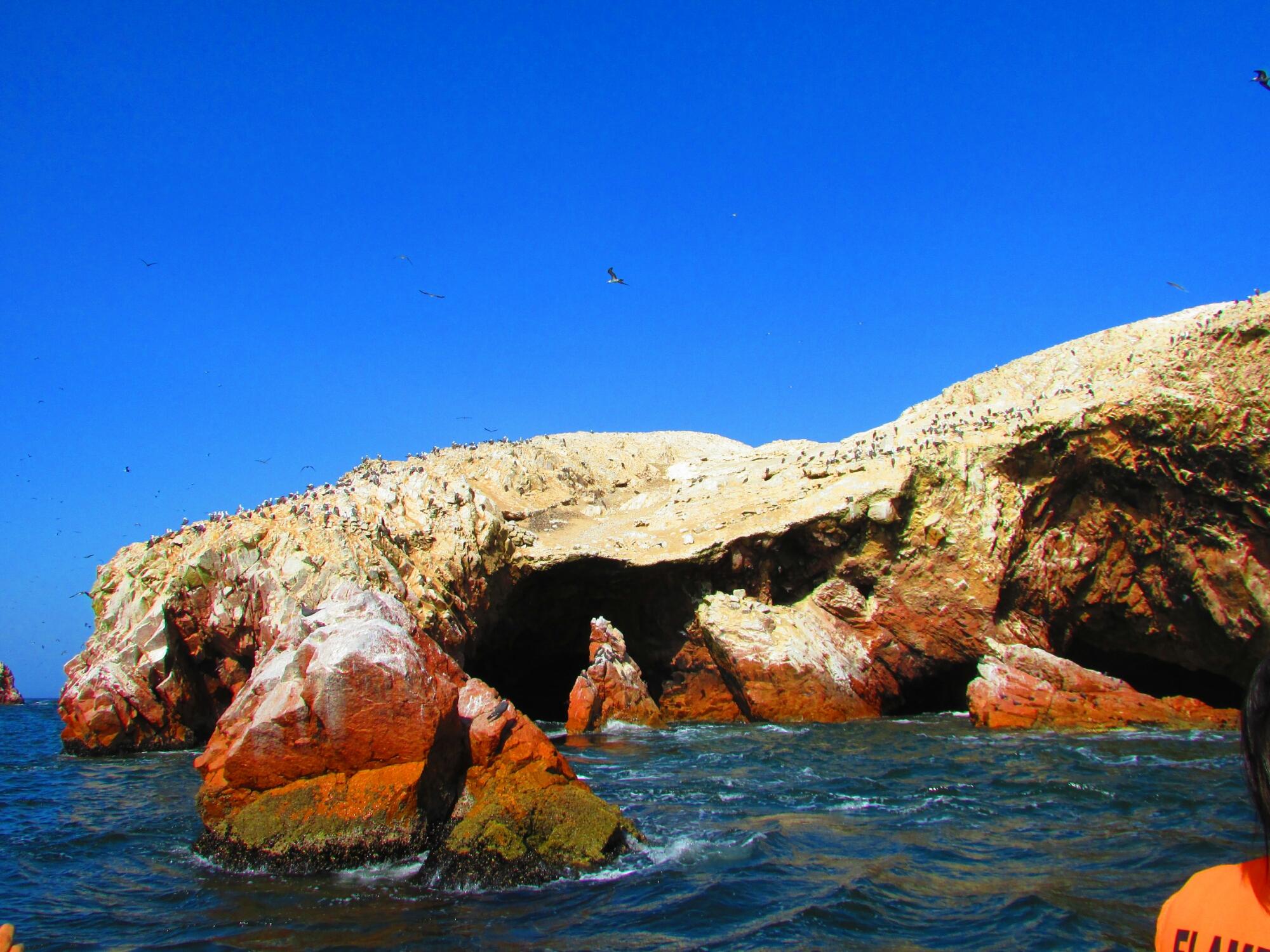 Isla Ballesta y sus maravillosas aves en Paracas, Perú