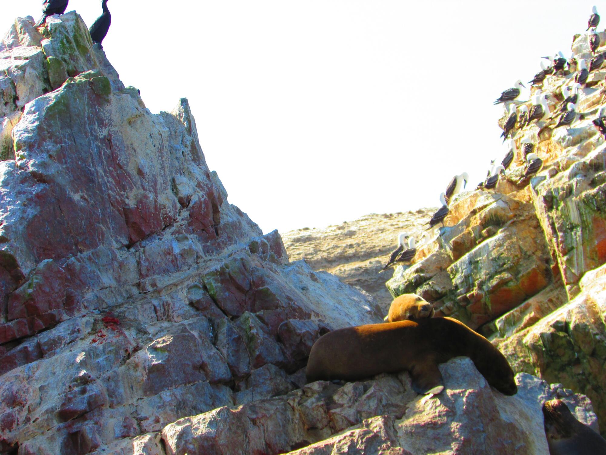 lobos marinos, rocas y aves en Isla Ballesta en Paracas, Perú